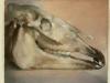 Paardenschedel